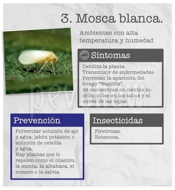 """Identificar la plaga """"Mosca blanca"""""""