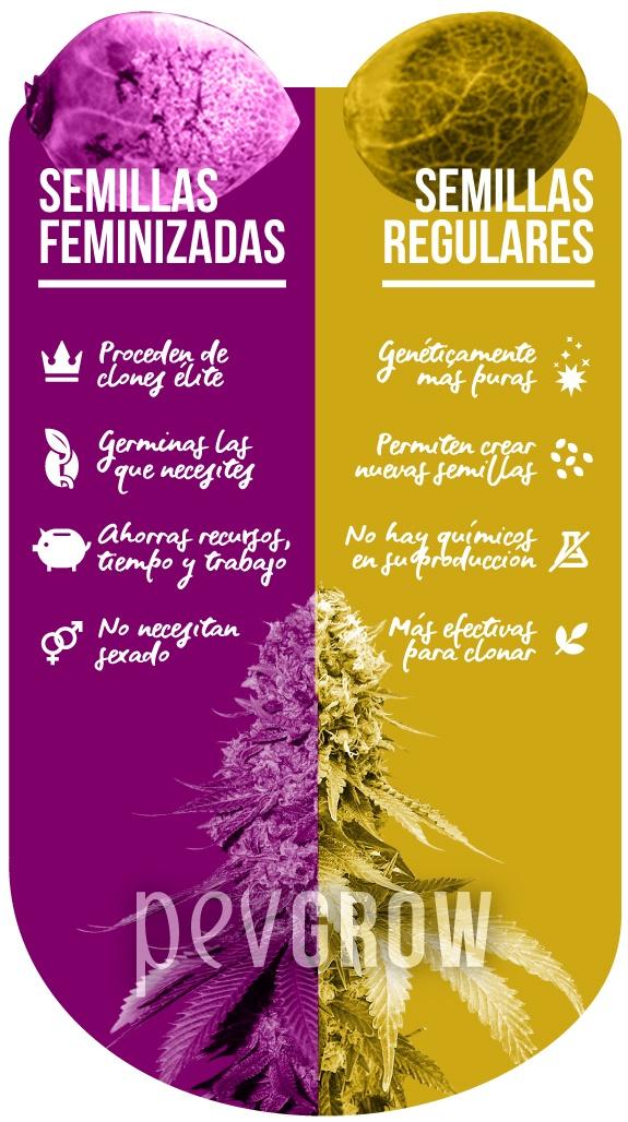 infografía que representa las ventajas de las semillas feminizadas y regulares*