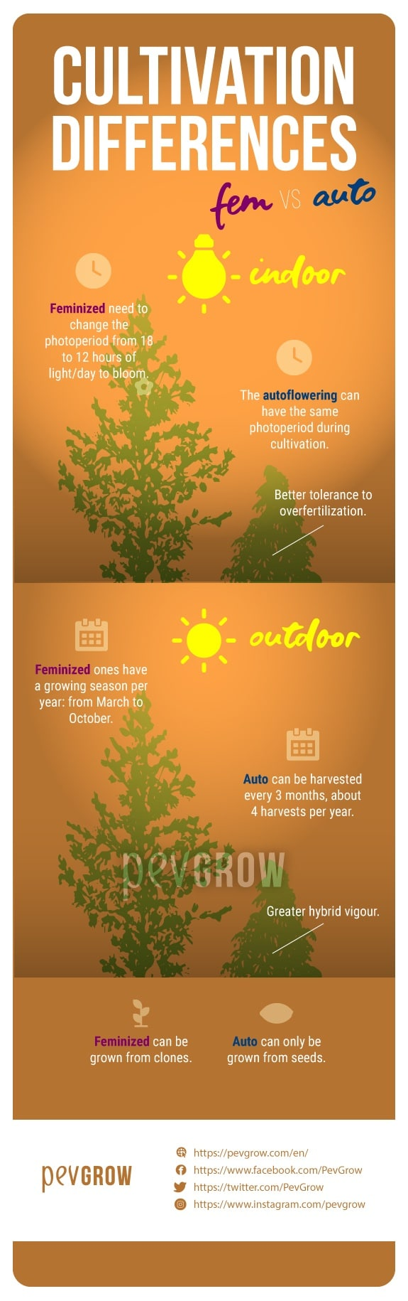 image showing the differences in cultivation between autoflowering and feminized plants*