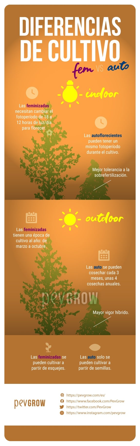 imagen que muestra las diferencias de cultivo entre las autoflorecientes y las feminizadas*