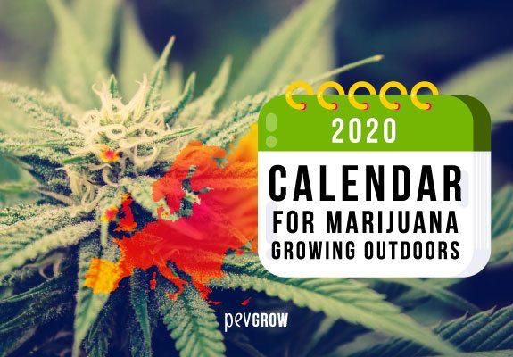 2020 Calendar for outdoor marijuana growing in Europe