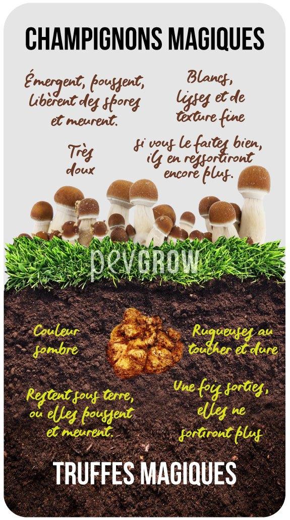 Image représentant les différences entre les truffes magiques et les champignons magiques*.