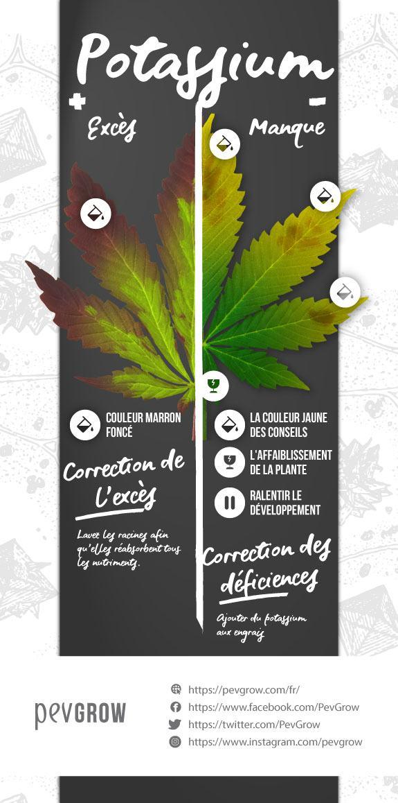 Infographie sur l'excès et la carence en potassium dans une plante de cannabis