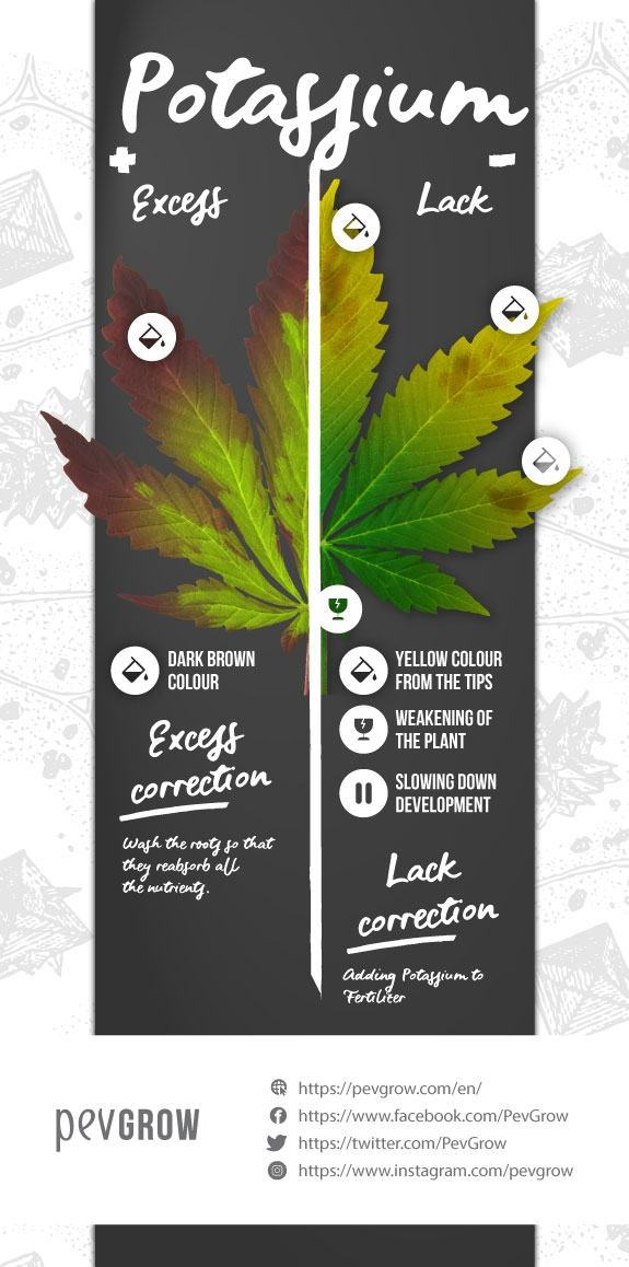 Infographics on Potassium Excess and Deficiency in a Cannabis Plant