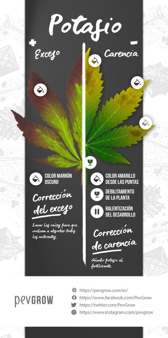 Infografia sobre el exceso y carencia de potasio en una planta de cannabis