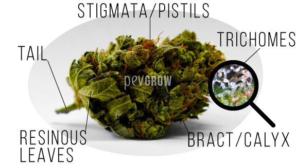 The 5 different parts of a bud of marijuana