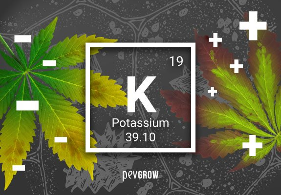 Chemical symbol for potassium with two cannabis leaves