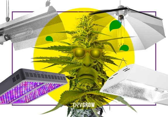 A cannabis plant with sunglasses sweats from the heat of various types of cultivation sites