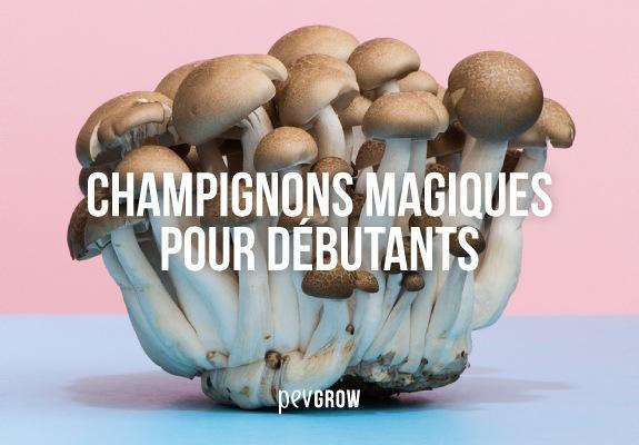 Image Champignons magiques