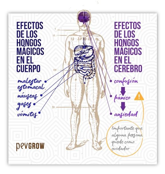 Imagen que muestra los efectos secundarios de consumir trufas o setas alucinógenas*