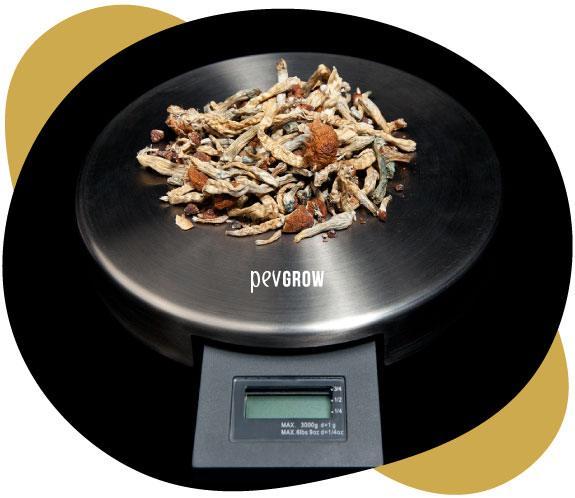 Immagine dove si vedono funghi magici pronti per essere pesati per la successiva micro-dosificazione