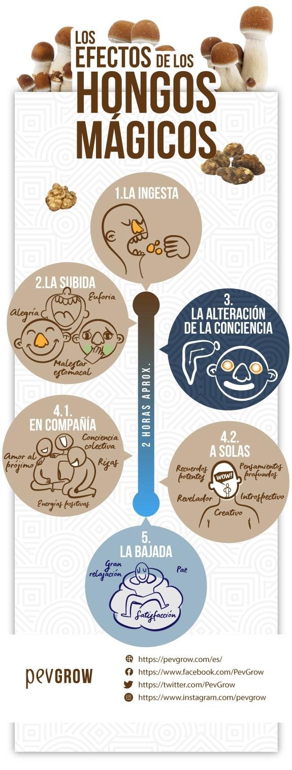 Infografía que representa las distintas fases por las que pasa el efecto de los hongos mágicos*