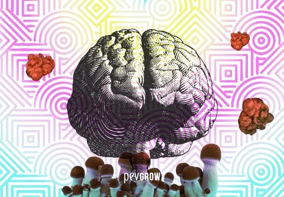 Stich eines Gehirns auf einem psychedelischen Hintergrund und von Pilzen und magischen Trüffeln umgeben