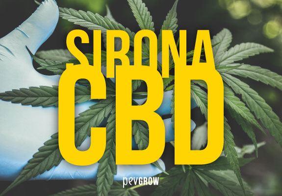 Sirona CBD from PEV Seeds, High CBD and Low THC Medicinal Cannabis