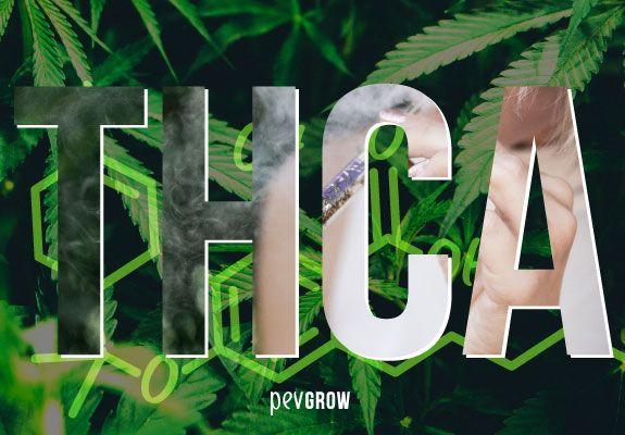 THCA, la forma ácida del THC