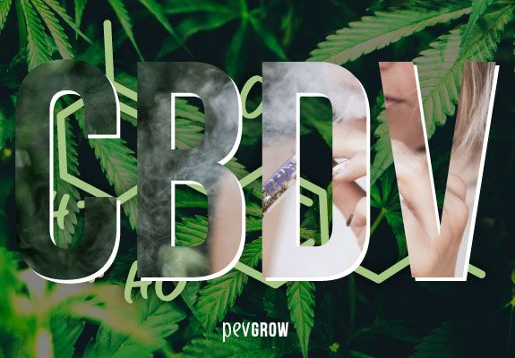 CBDV, What is it and what is it for?