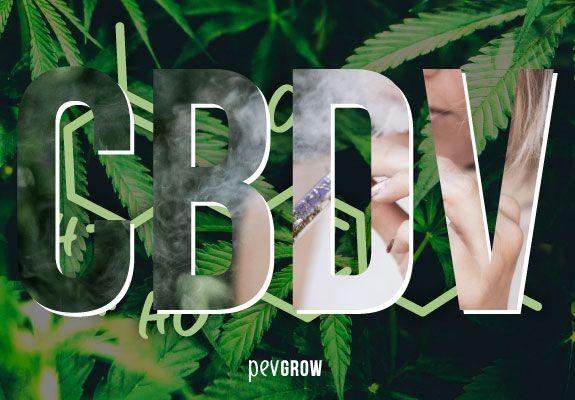 Imagen con letras grandes CBCV sobre una planta de cannabis