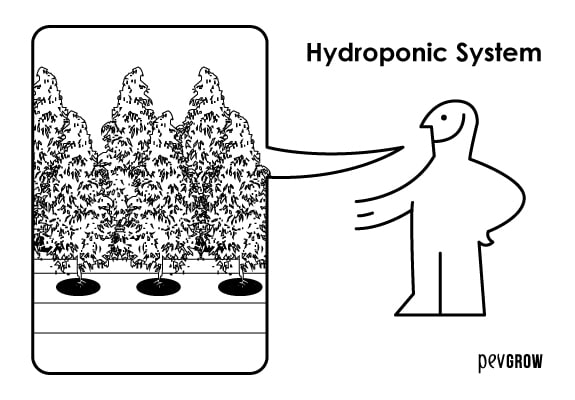 Hydroponics, the formula 1 of weed growing