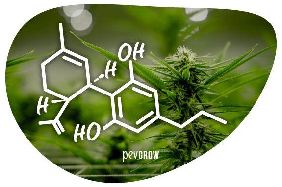 Imagen de la molécula del CBDV*