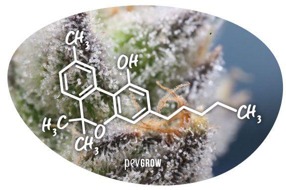 Imagen de la molécula del CBN*
