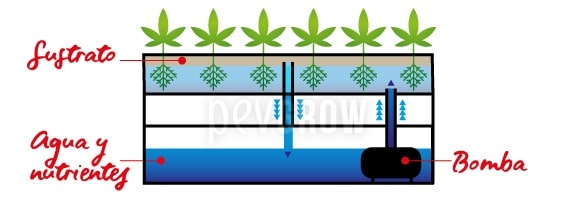 Imagen de un diseño gráfico que representa el funcionamiento de un cultivo hidropónico*