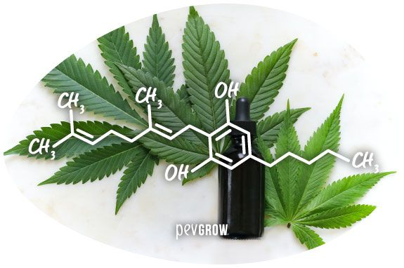 Imagen de la molécula del Cannabigerol*