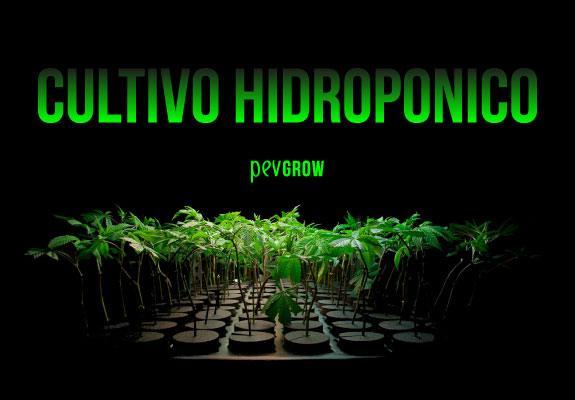 Cultivo indoor de Marihuana Hidropónica