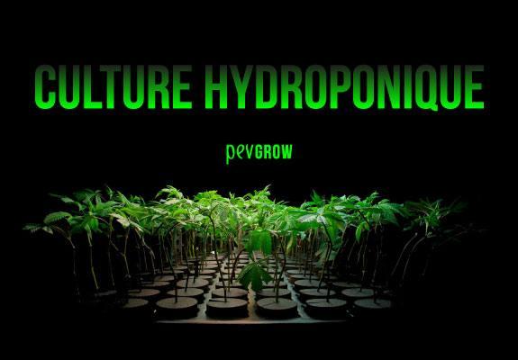 Image d'une culture hydroponique dans la pénombre