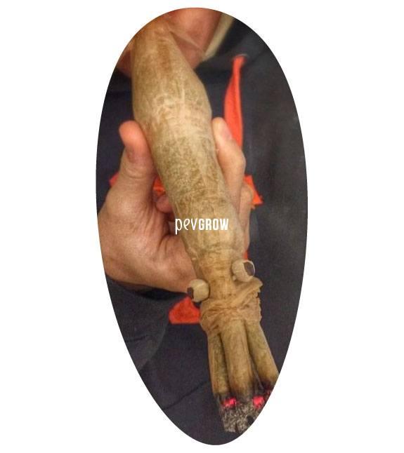Fotografía de un porro escultura, un buen ejemplo de porroflexia*