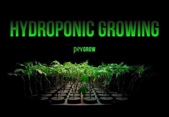 Indoor Hydroponic Cannabis Growing