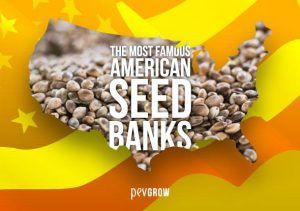 The best American Seed Banks