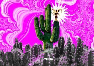 Peyote, San Pedro et toutes les infos sur les meilleurs cactus de mescaline