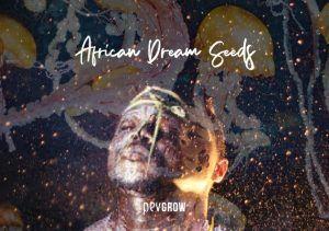 African Dream Seeds, toutes les infos sur l'herbe des rêves