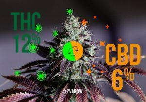 Les meilleures variétés de cannabis médical avec différents ratios THC / CBD