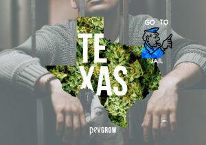 Leyes cannábicas en Texas ¿Qué se puede y qué no se puede hacer?