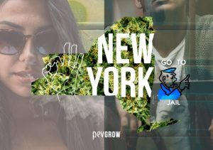 Cannabis laws in New York, everything you need to know