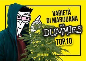 Le 10 migliori varietà di marijuana coltivate più facili