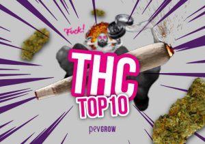 Top 10 de las variedades con más cantidad de THC del mercado