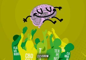 L'effetto entourage della cannabis, pura magia