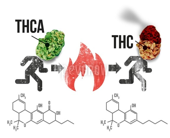 Infographics representing the transformation of THCA into THC by heat*