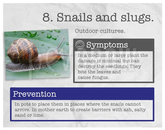 "Identify the plague ""Snails and slugs""."