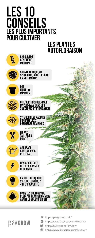 image d'une infographie qui représente la meilleure façon de cultiver l'autofloraison*