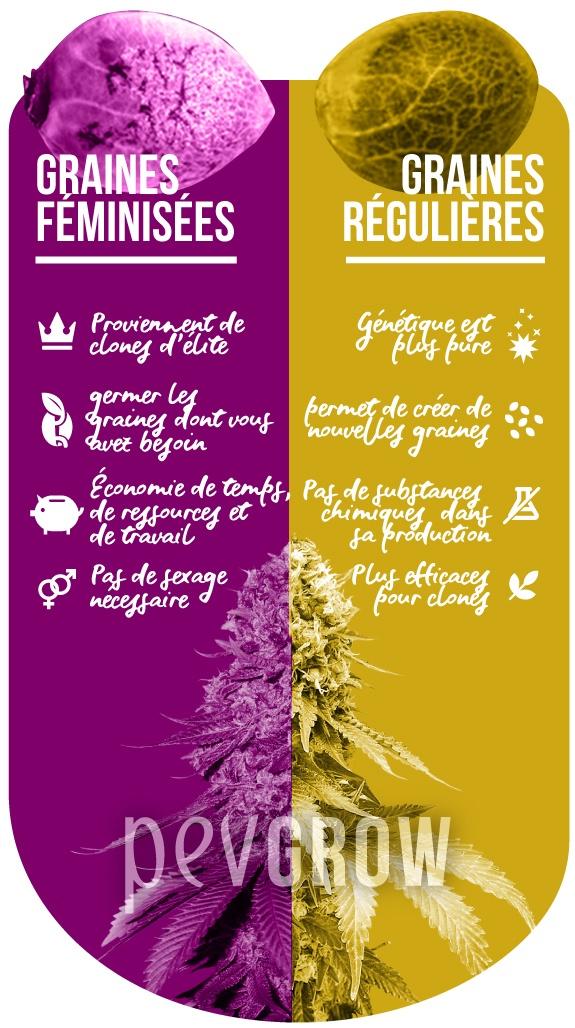 Infographie montrant les différences entre les graines femelles et les graines reg.*