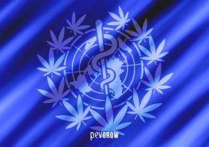 L'OMS soutient la légalisation du cannabis