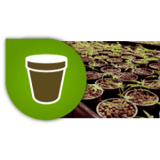 Pots-Trays-Tables growing cannabis