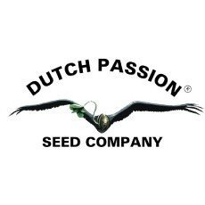 ▷ Feminized seeds from Dutch Passion Bank
