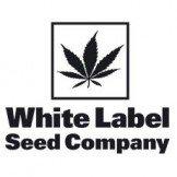 White Label by Sensi Seeds