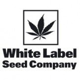 White Label by Sensi Seeds