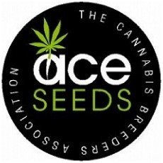 ▷ The entire Ace Seeds feminized seed catalogue