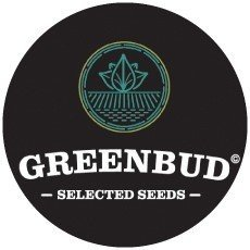 Greenbud Seeds Auto
